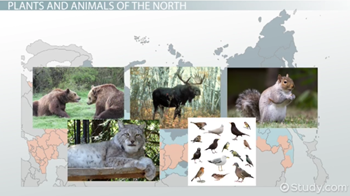 Russia and Central Asia climate and animals