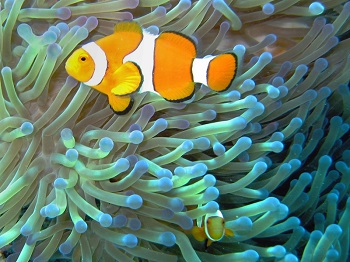 Coral Reef Animal Adaptations Lesson for Kids | Study.com