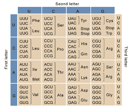 how to use a codon table