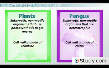 comparison between fungi and plants