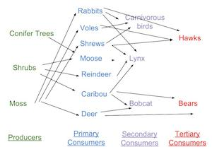 The Boreal Forest Food Web | Study.com