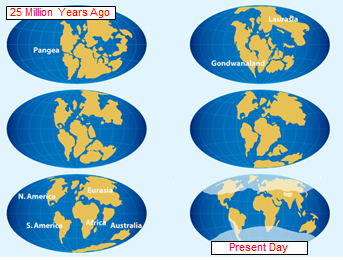 Evidence Of Continental Drift For Kids