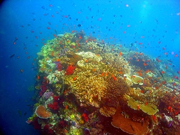 Coral reefs have been described as the rainforests of the sea because of how complex their ecosystems are