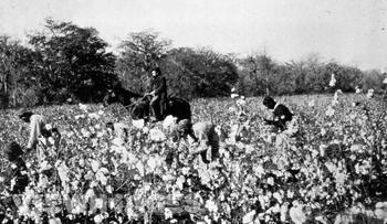 Life on Southern Plantations | Study.com