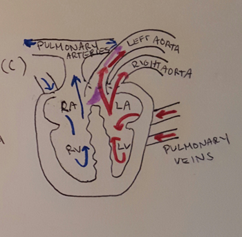 Reptile circulatory system video lesson transcript study crocodilian heart ccuart Choice Image