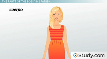 The Parts of the Body in Spanish - Video & Lesson Transcript