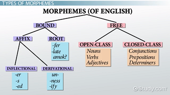 Morphemes examples definition types video lesson transcript definition classifications types ccuart Choice Image