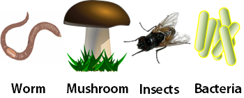 Decomposers Lesson for Kids: Definition & Examples | Study.com