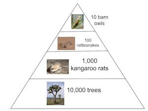 The Desert Energy Pyramid   Study.com