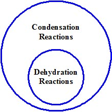 dehydration vs. condensation