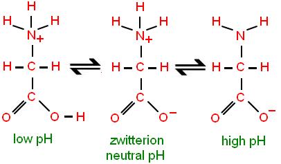 Zwitterion Structure Function Video Lesson Transcript Study Com