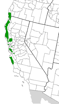 Where Is the Redwood Forest? - Location, Facts & History | Study com