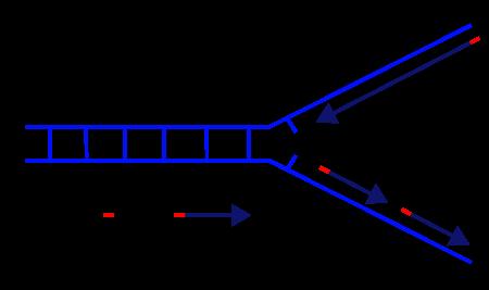 DNA replication... Hydrolysis Diagram For Kids