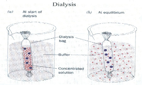 diffusion through dialysis tubing In biochemistry, dialysis is the process of separating molecules in solution by the difference in their rates of diffusion through a semipermeable membrane, such as dialysis tubing [1] dialysis is a common laboratory technique that operates on the same principle as medical dialysis.