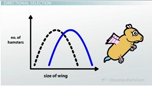 Directional Selection Graph