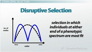 Disruptive Selection Graph