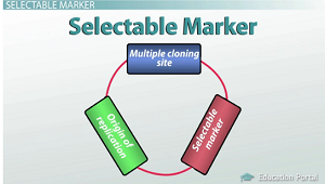 Selectable marker