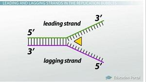 Lagging strand