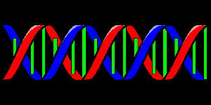 Picture of DNA diagram