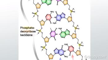 how to break phosphodiester bond
