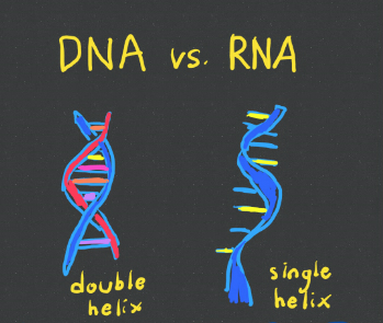 a study in dna essay Dna by dennis kelly - this page explains the characters in dna by dennis kelly to help you with your gcse english literature revision this page focusses on phil, leah, cathy, richard, mark, jan, brian, danny, lou, john tate and adam.