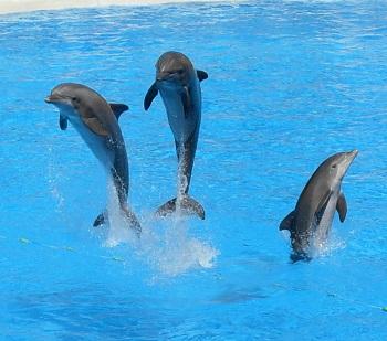 Animals Using Echolocation