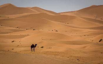 Desert Biome Lesson For Kids Studycom - All deserts