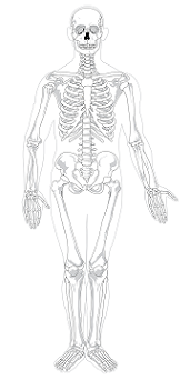 Bone Marrow Lesson for Kids: Definition & Facts | Study com