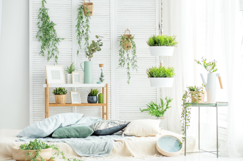 A college room decorated with many plants