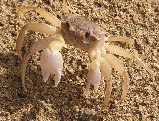 Flashcards - Estuary Biome Animals & Plants List ...