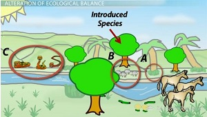 Effects of Introduced Species Have Chain Reaction