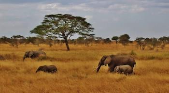 African Grassland Food Chain