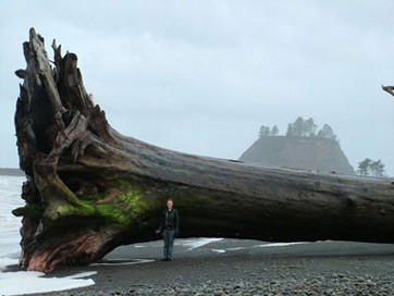 La Push Washington by Philip Lachman