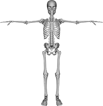 The Human Spine: Lesson for Kids | Study.com
