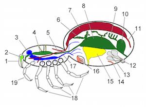 Arachnid Digestive System & Diet | Study.com