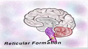 reticularformation