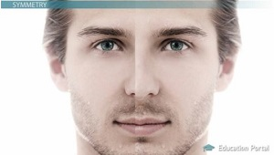 Physical Traits and Attraction: Symmetry, Ratios & the
