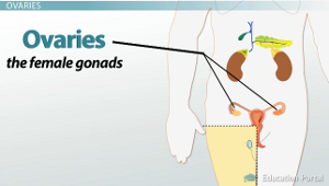 glands of human body in hindi