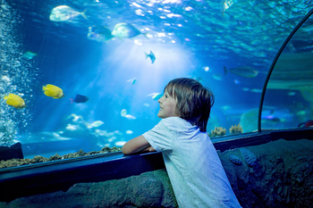 A child reinforces learning at an aquarium