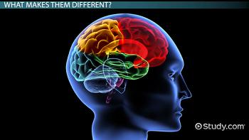 Introduction to Psychology/Biological basis of behavior ...