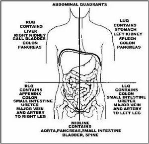 The 4 abdominal quadrants regions organs video lesson four abdominal quadrants ccuart Image collections