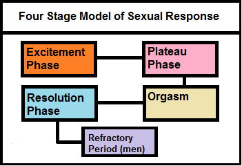 Masters and johnson human sexual response