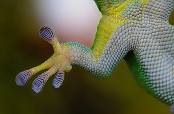 Image result for arboreal adaptations features