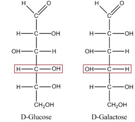 Fischer Projections in Organic Chemistry: Definition