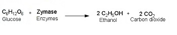 fermentation studies of glucose and ethanol The enzymes needed to convert corn starch to glucose fermented to ethanol by  yeast can now be found in new corn and 'superior yeast,'.