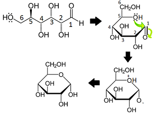Glucose formation reaction