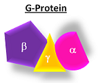 G-proteins typically have three pieces: alpha, beta and gamma