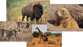Grassland Animals Lesson For Kids Study Com