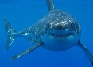 Shark Habitat: Lesson for Kids | Study.com