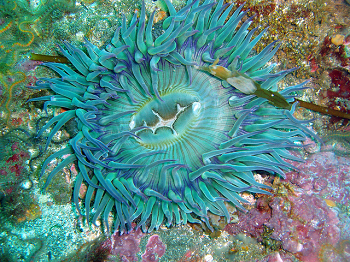 Sea Anemone Facts Lesson For Kids
